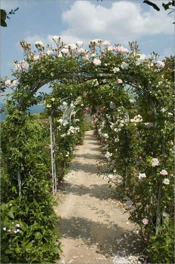 Granville.roses