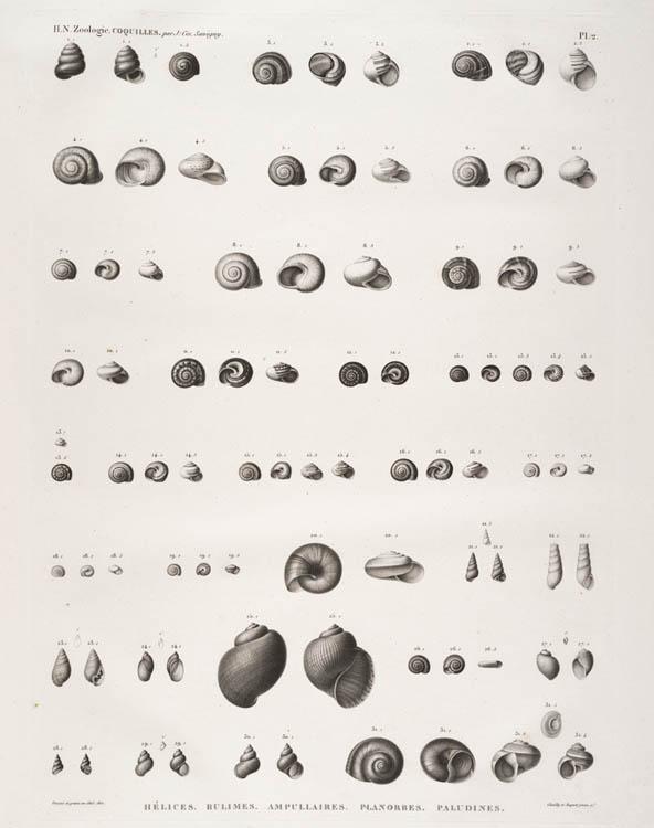 Napoleon shells
