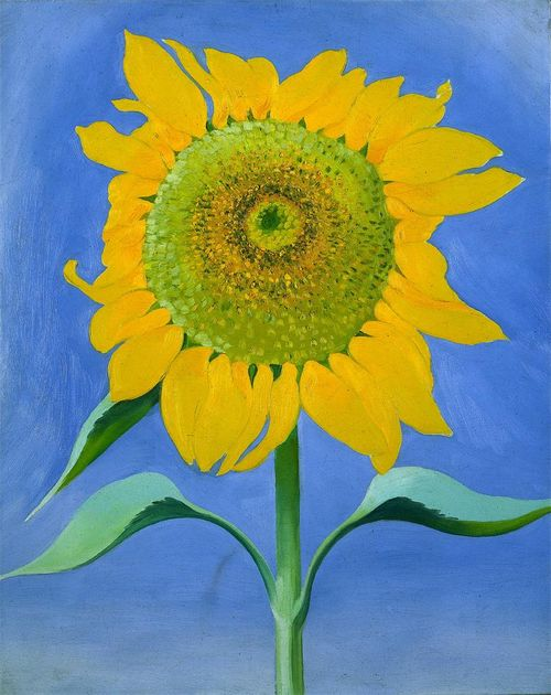 Georgia_okeefe-sunflower-1935