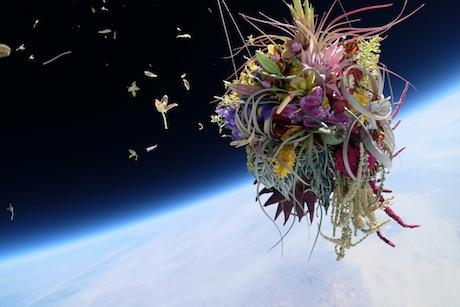 Azuma Makoto - Botanical space flight, 2014