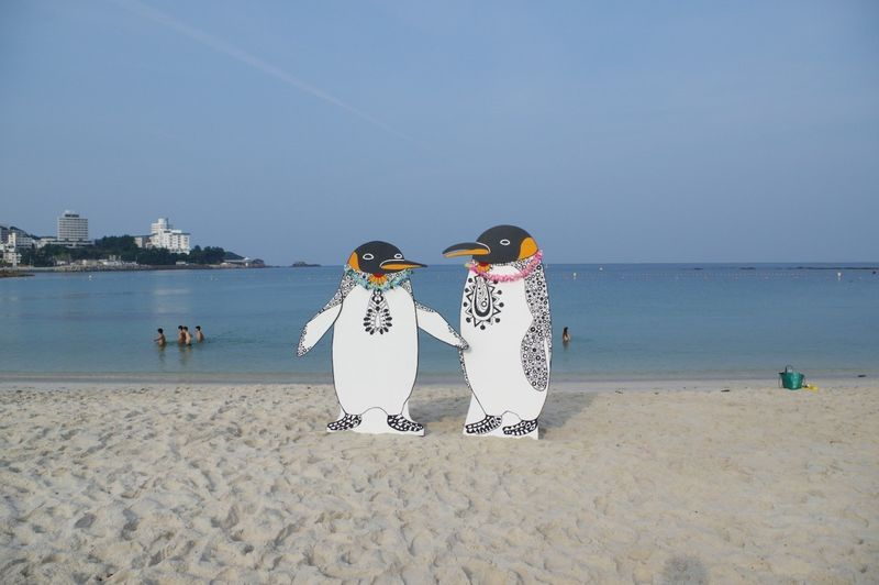Satoko-Wada-penguins-beach