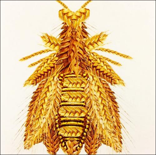 Sirivannavari spring 2015 embroidery